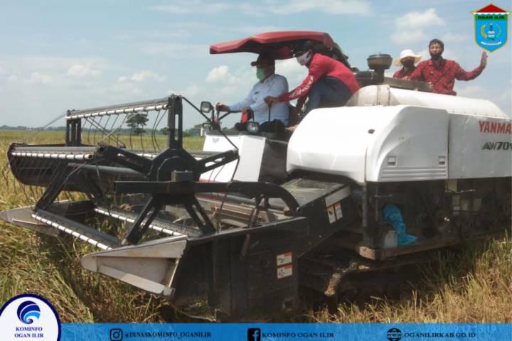 Panen Raya Di Kecamatan Pemulutan Selatan, Bupati OI : Transformasi Pertanian Untuk Kesejahteraan Masyarakat